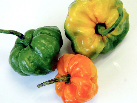 how to grow scotch bonnet peppers in jamaica